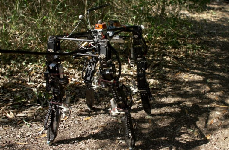 Quadruped learns to adapt its legs to changing terrain