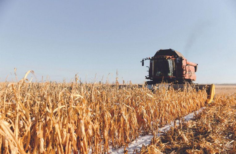 An Army of Grain-harvesting Robots Marches Across Russia