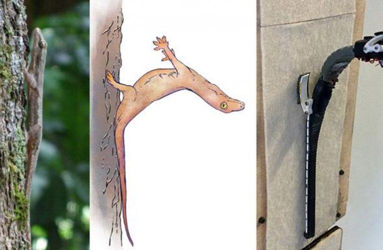 Video Friday: Robot Gecko Smashes Face Into Tree