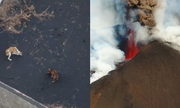 Drones to Attempt Rescue of Starving Dogs Stranded by Volcano